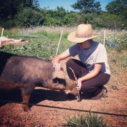 Our intern Maria with one of the Duroc/Red Wattle Cross pigs