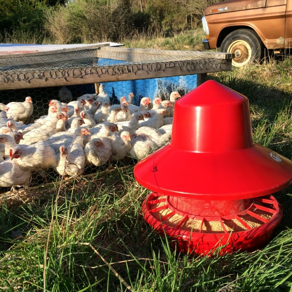 new broiler feeder