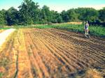 Leslie seeding fall crops including mustard greens, spinach, beets, carrots, radishes, and more!